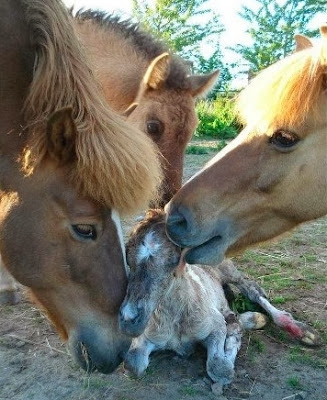Ponies love for new born