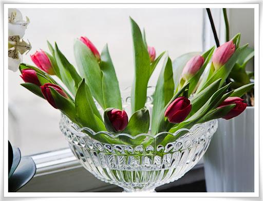 Tulpaner i stor glasskål