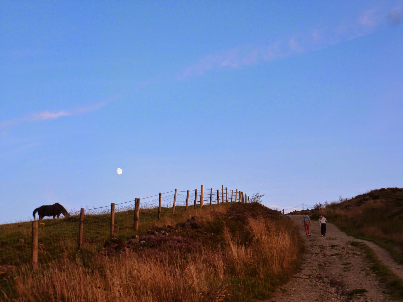 sunset walk uphill with family next to horse field with the moon showing