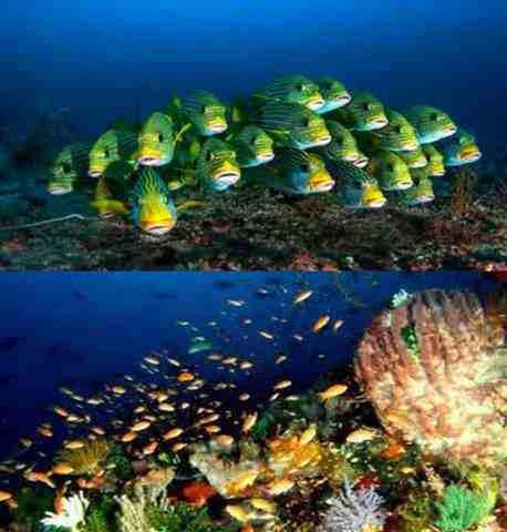 Gambar keunikan ekosistem laut di Raja Ampat Papua