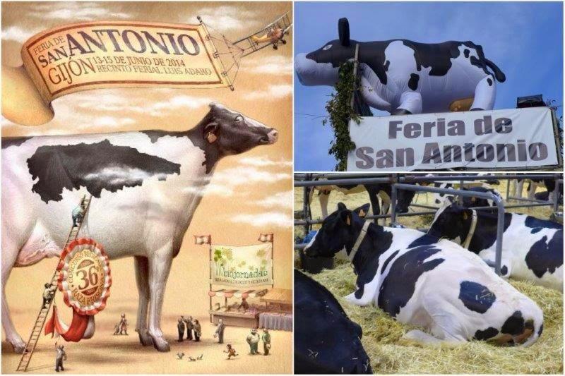 Feria ganadera de San Antonio en Gijón – Vacas en el Pabellón Central del Recinto Ferial Luis Adaro