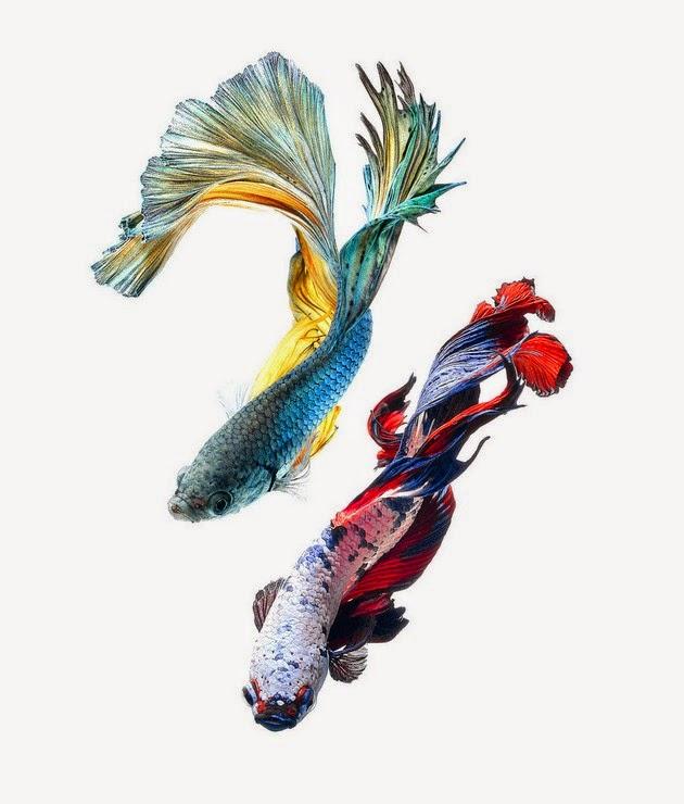 color-fish-1