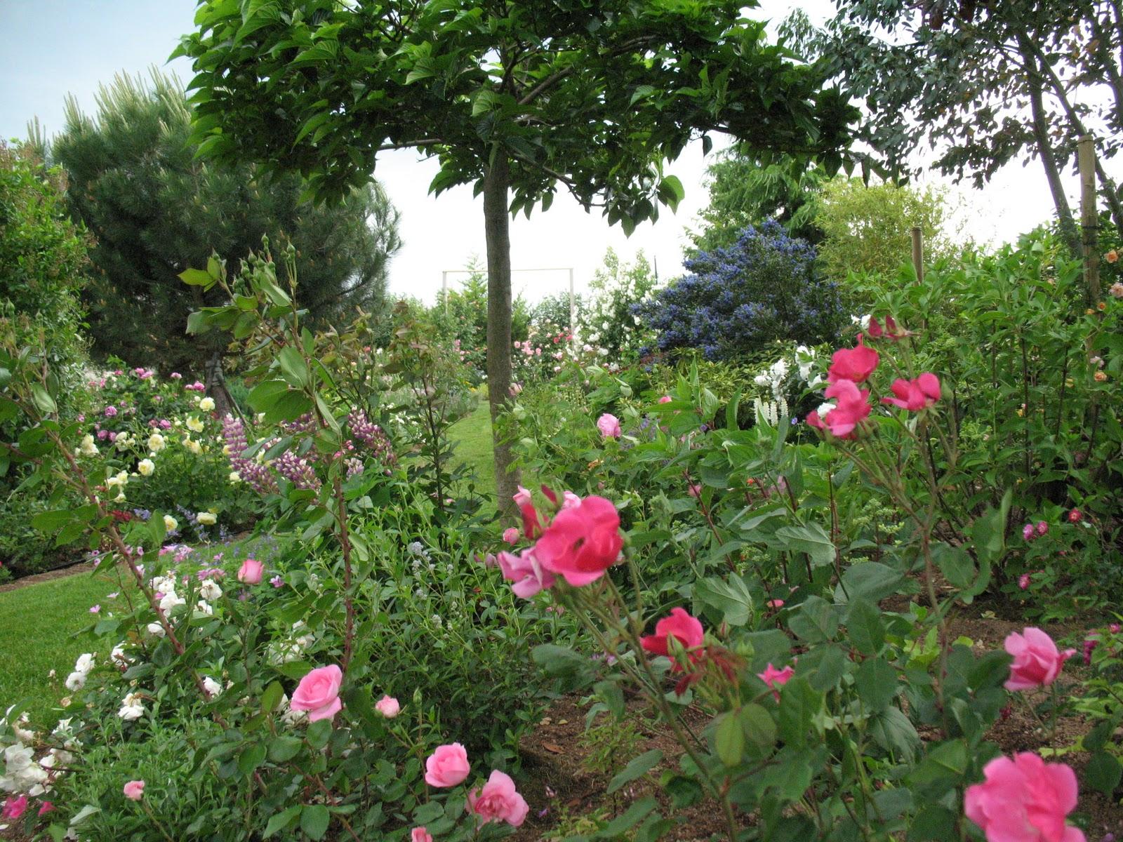 Roses du jardin ch neland l 39 volution du jardin - Jardin de chen ...