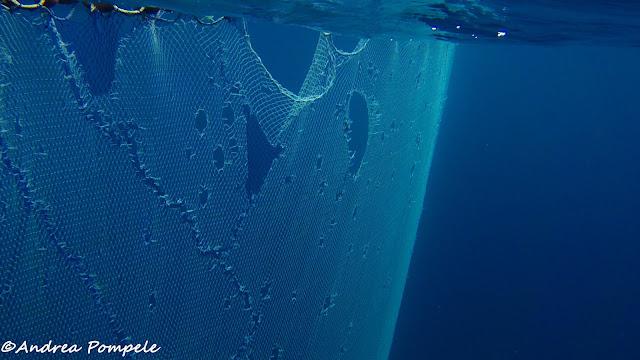 fishermen net mafia island blue