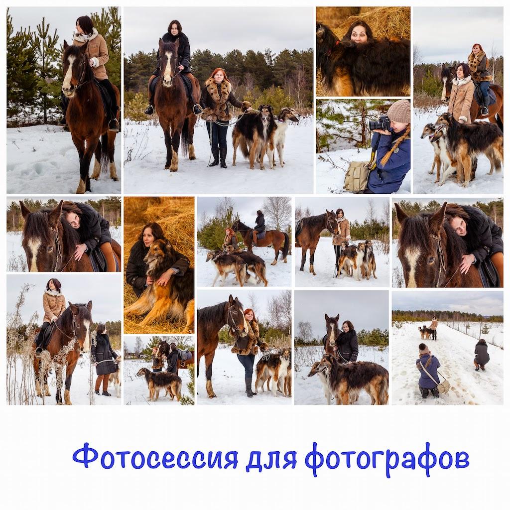 Фотосессия с лошадьми и борзыми в деревне