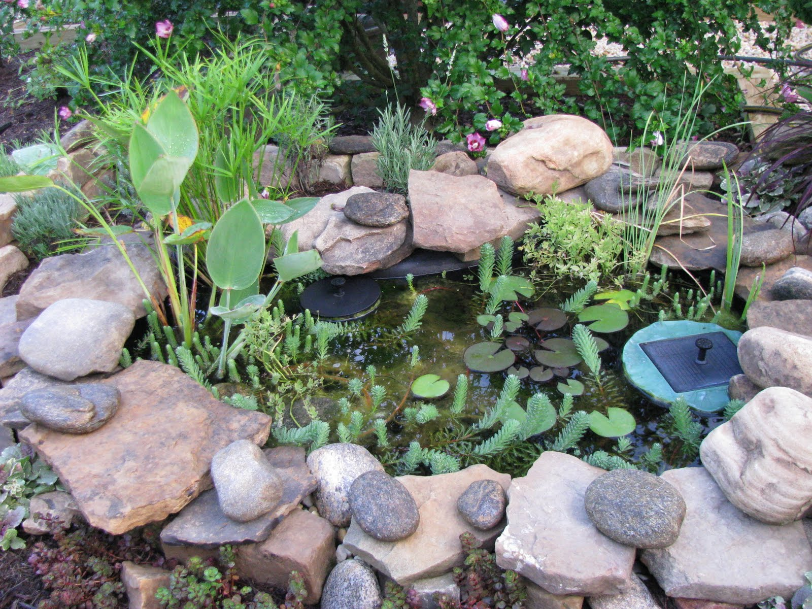 The herbarie some thoughts about hot summertime for Oxygenating plants for a small pond