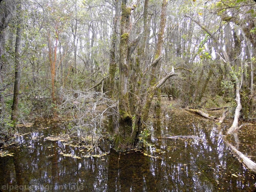 Bosque inundable, Pitras, lago Puelo