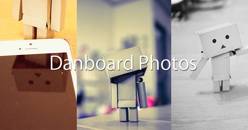 写真記事:ダンボーさんの写真をいくつか