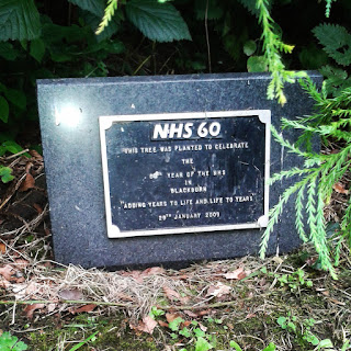 NHS tree in Blackburn, NHS60,