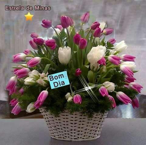 Flores..tulipas