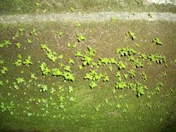 Musgo verde na parede, é tão simples a natureza...
