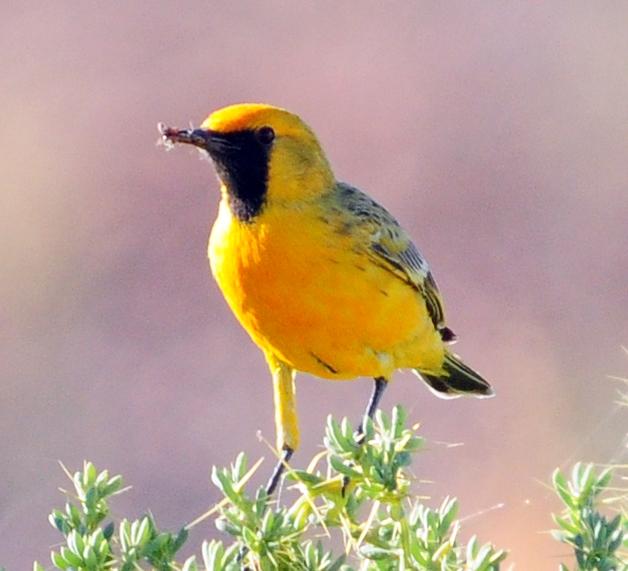 Bird photographs april 2011 - Chat orange ...