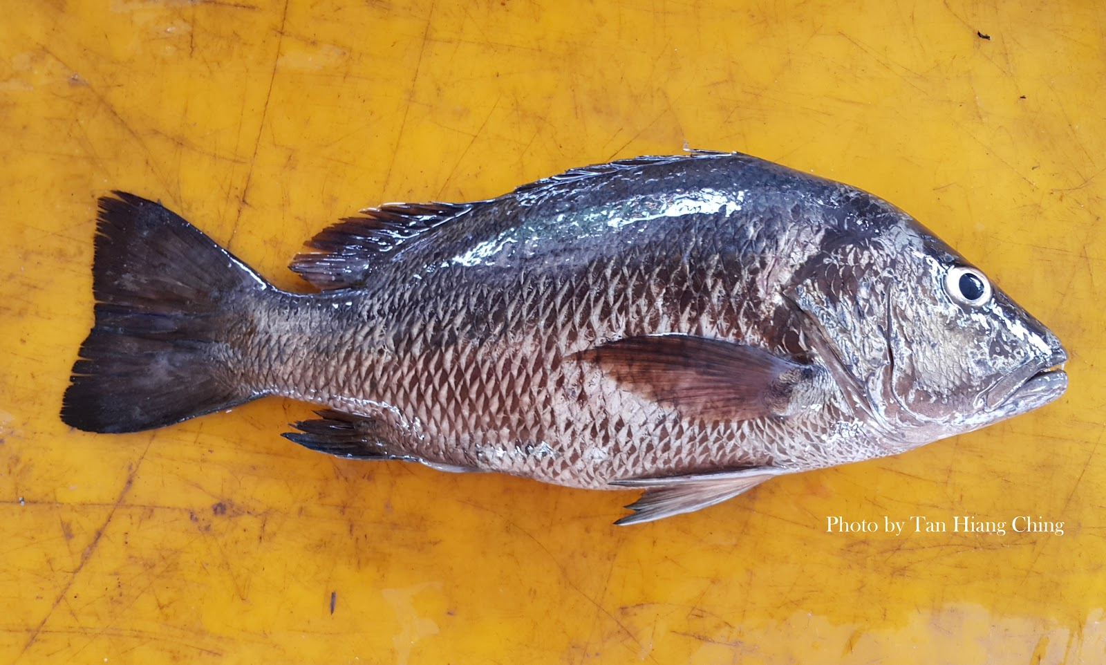 how to bottom fish for snapper
