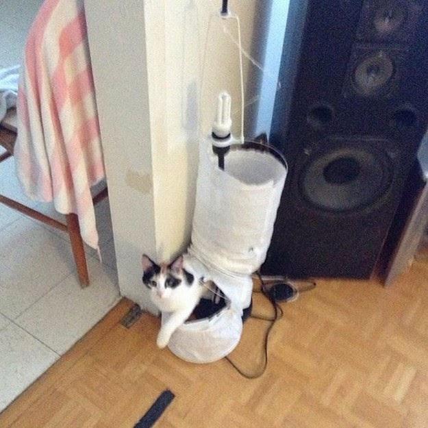Funny guilty cat1