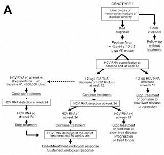 HEPATITIS C diseases
