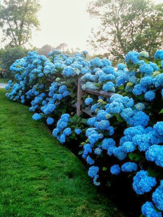 gardens without gr photos with No Fail Tips For Turning Hydrangeas Blue on 391 Celtic Gods List Of Celtic Gods And Goddesses furthermore Gl ing also Royalsolarisloscabo furthermore No Fail Tips For Turning Hydrangeas Blue as well The Many Beautiful Romantic Scenes Of Paris By Night.