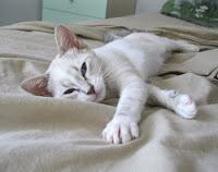 Trudi,nata il 15/3/2013
