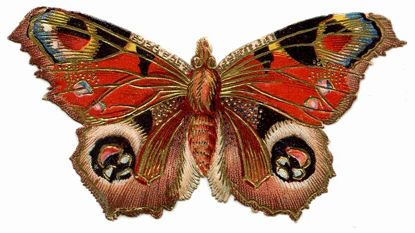 Most Beautiful Butterfly HD Wallpapers