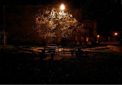 https://www.flickr.com/photos/animisiewaz/4652329738