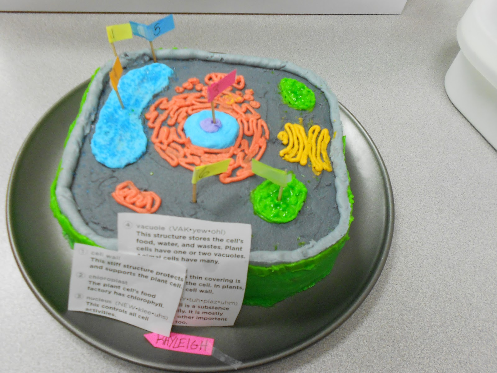 Plant Cell Styrofoam Model http://mcdonaldgrade4.blogspot.com/2012/08/make-cell-model-project.html