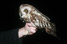 2012 RINGING TOTALS