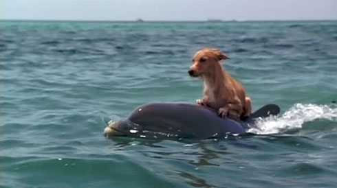 Persahabatan Seekor Anjing dan Lumba-lumba