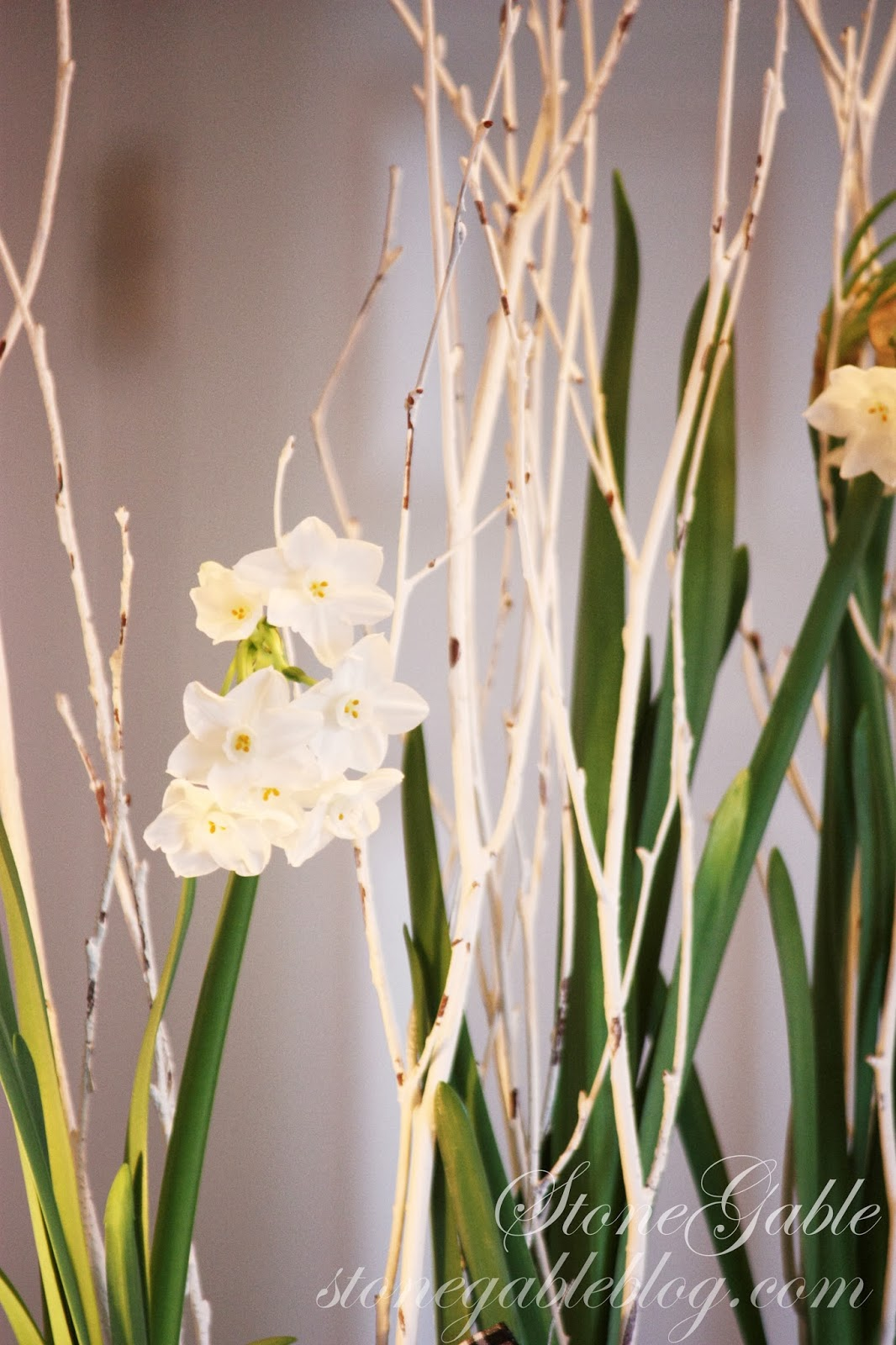Its time to plant paperwhites stonegable paperwhites make the most delightful gifts for hostesses teachers hairdressers etc mightylinksfo
