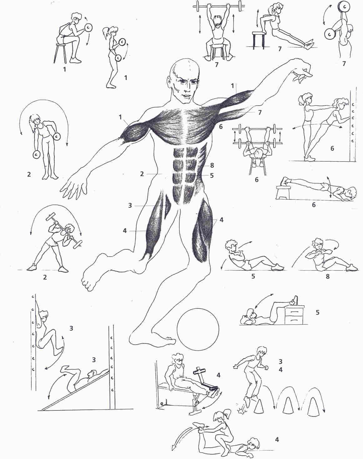 5 ejercicios positivos de la fuerza: