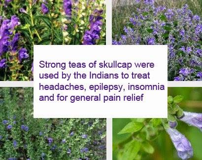 Skullcap herb benefits