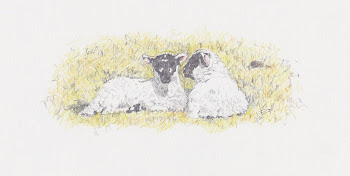 Two Snoozing Lambs