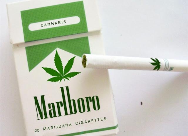 Benarkah Wartawan Tempo Boleh Merokok Ganj*?