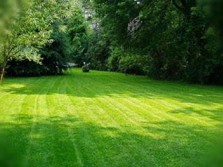 jenis-jenis-rumput-taman.jpg