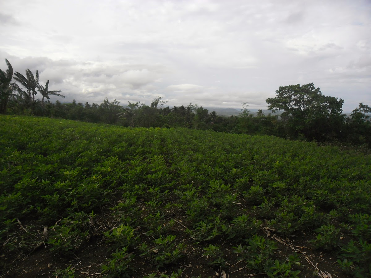 Farm Lot - Paradise Embak (Paquibato Dist.), Davao City