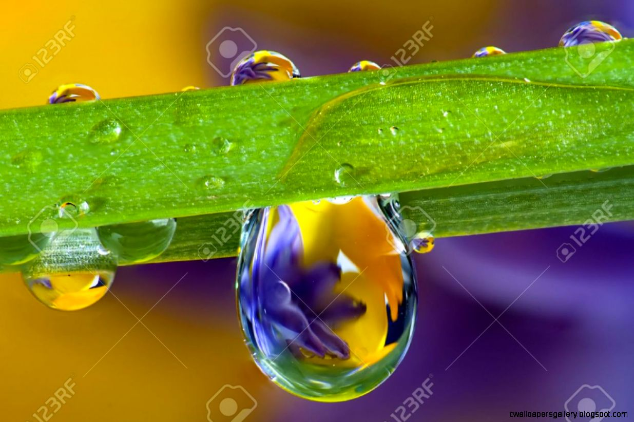 Wild Flowers Refracted In Water Droplets On A Single Blade Of