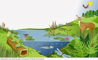 Pengertian, Satuan, Jenis dan Komponen Ekosistem