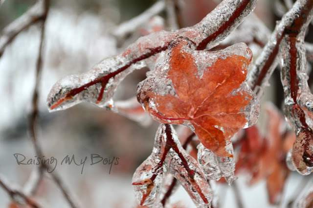 red maple leaf in ice