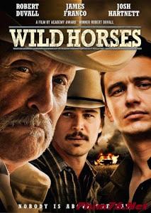 Ngựa Hoang - Wild Horses