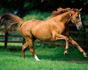Animales (caballo )