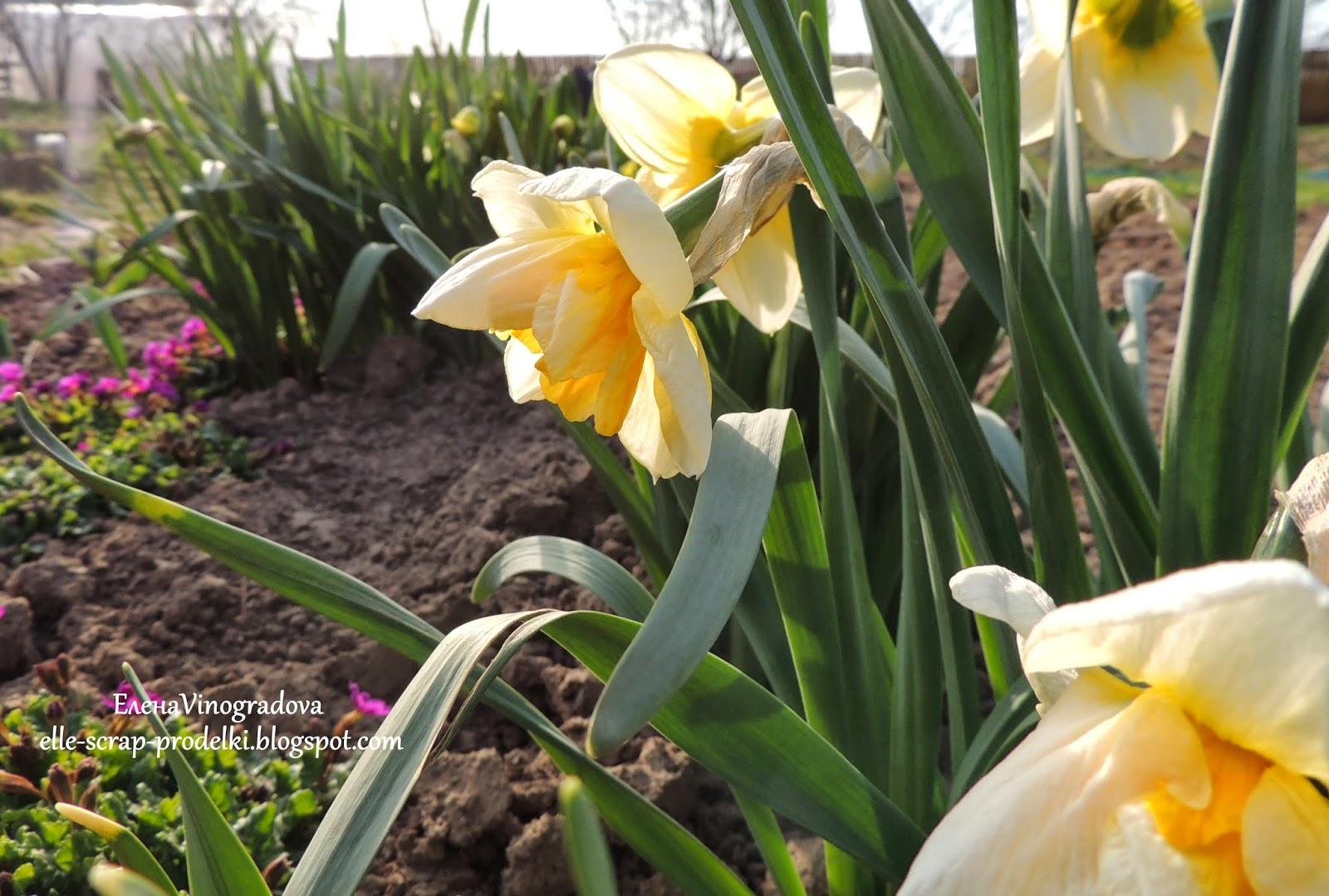 ЕленаVinogradova. Цветы нашего сада #8