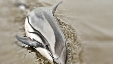 muerte delfines