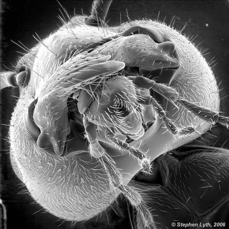 16 Terryfying Images From The Microscope - The face of an ant