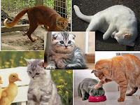 Kucing memandang tanpa berkedip, Kucing duduk tidak bergerak, Kucing Berguling, Kucing tidak pergi2, Kucing mencakar