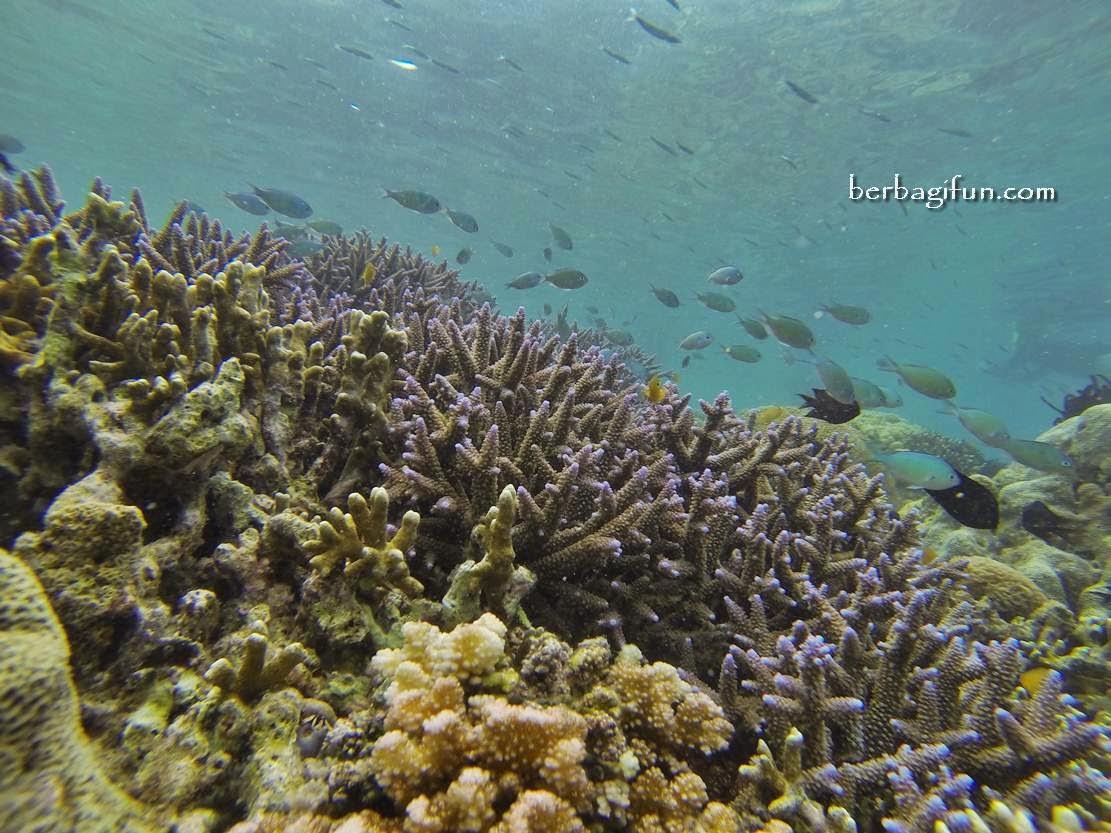 tempat snorkling lombok