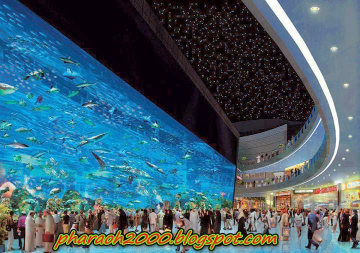 'Dubai Aquarium' One of the largest tanks in the world!