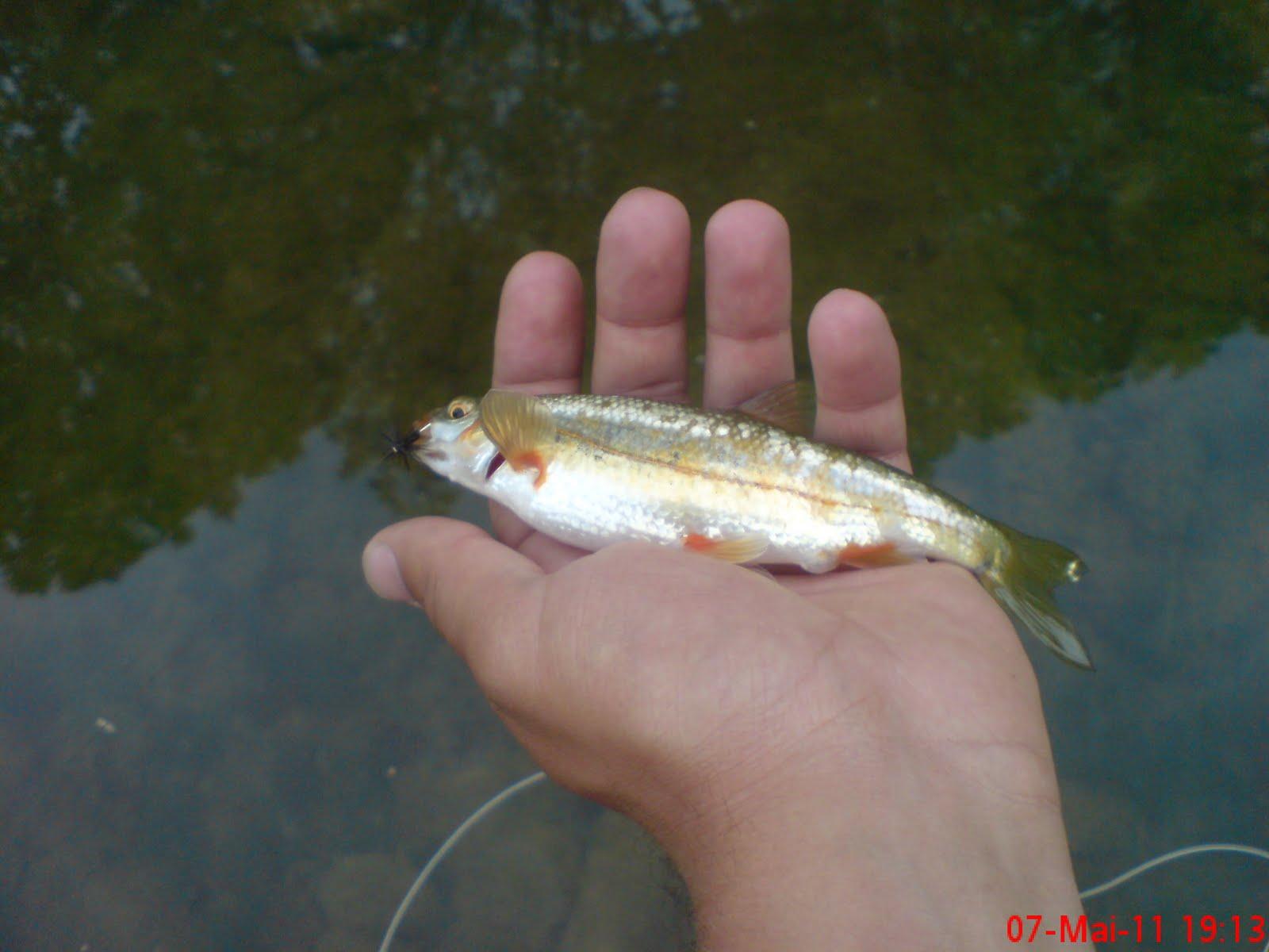 P che la mouche dans l 39 ouche amont fish 39 n style for Fish n style