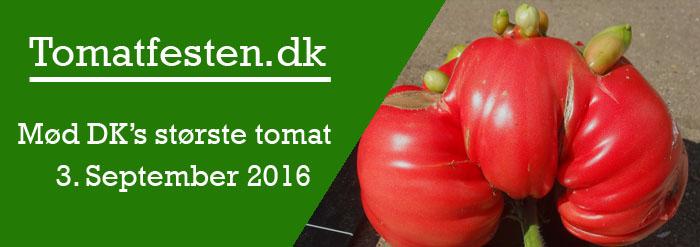 Årets tomatfest