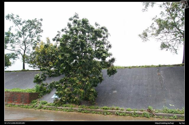 2013-07-13 蘇利颱風侵襲南投 又一顆倒了!