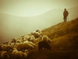 Ovčar u Rumunjskoj download besplatne pozadine slike za mobitele