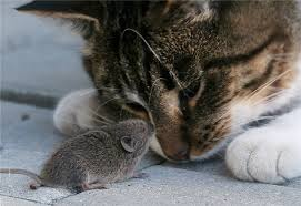 cat and mouse flirting