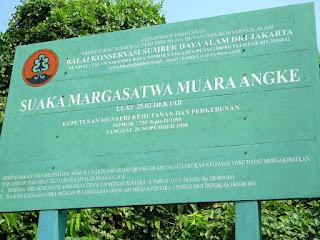 Muara Angke, Wildlife Jungle of Jakarta Indonesia